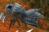 Lont-Mantis.jpg